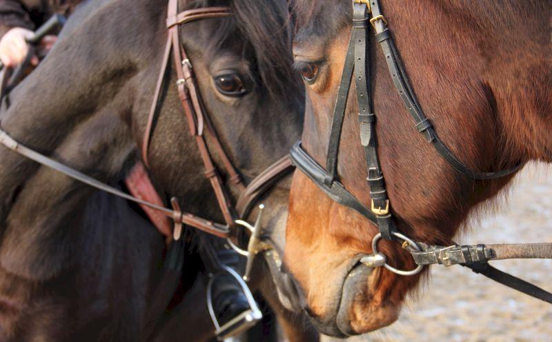 Se faire plaisir dans le respect du cheval